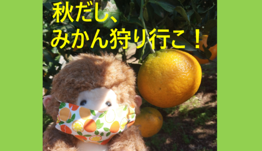 横浜でみかん狩り|芝口果樹園に行ってきたよ